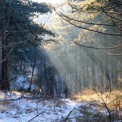 winterse zonneschijn