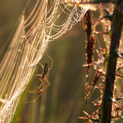 early morning spider