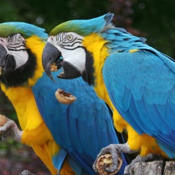 2 papegaaien