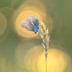 Vlindertje in avondlicht