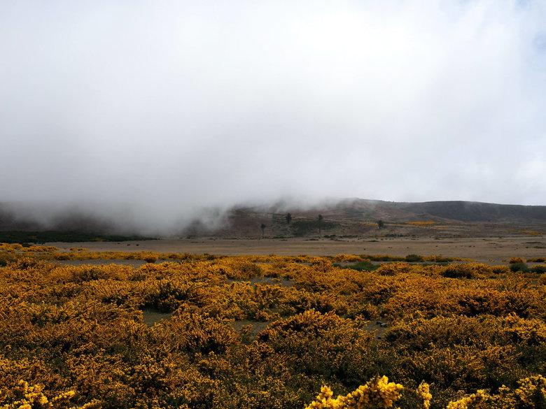 Mijn Reizen - We rijden naar een van dc hoogste  gedeelte van het eiland   daar kom e al snel in de wolken  omdat het daar zo vochtig is groeien er he