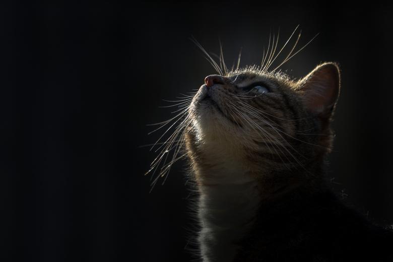 Alert - Dit is onze Zazu. Alle aandacht voor de vogeltjes.