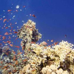 koraalrif in de rode zee