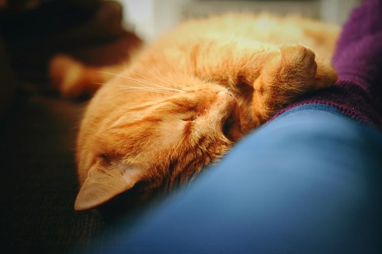 Rosti slaapt