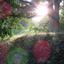 Spelen met zonlicht door de bomen