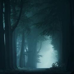 The Darkness of Night.