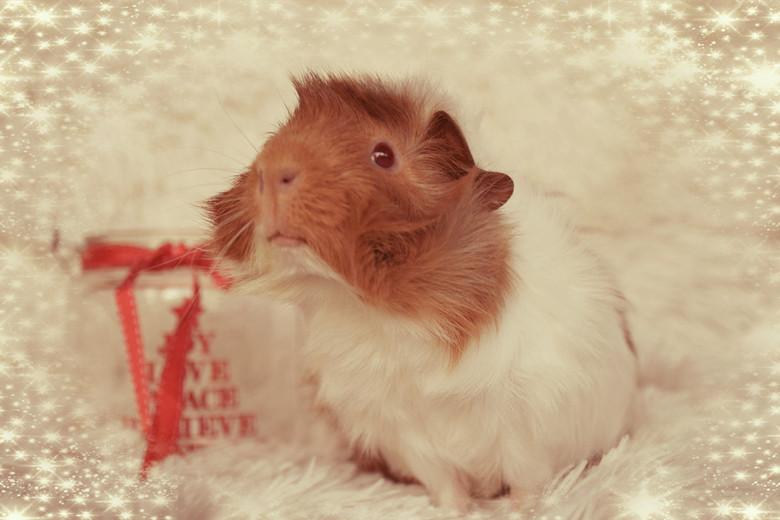 Pukkie in kerstsfeer - zie 'Lucy in kerstsfeer'