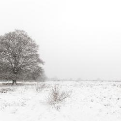eerste sneeuwval