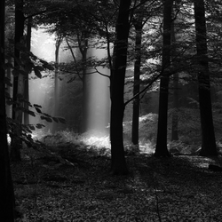 Licht in donkere dagen
