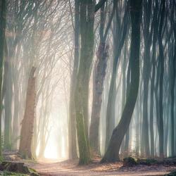 The deep path