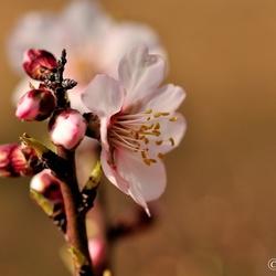 Voorjaar......komt eraan!