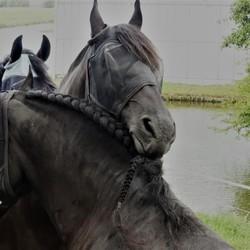 P1080800 Paardenverzorging bij elkaar Filter Nappa  29 aug 2019