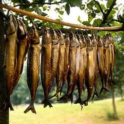 Makrelen in de bomen
