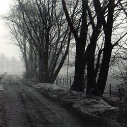 Winter bomen