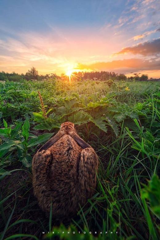 Morning Sun - Even stil zitten en genieten van de zonsopkomst. <br /> Ik noem het een een &quot;geluksperspectief&quot;