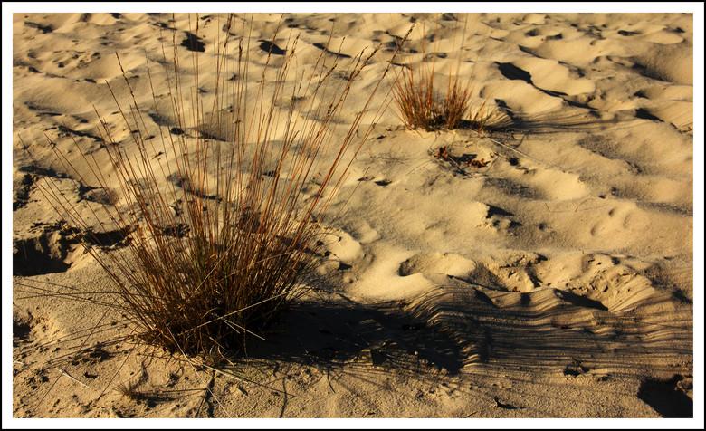 drunense duinen - *<br />