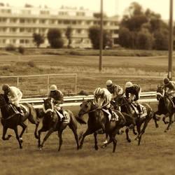 Paardenkoers - Oostende