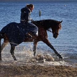 paardenplezier