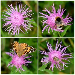 bloemetjes en bijtjes enzo