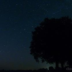 Shooting Star...Make a Wish