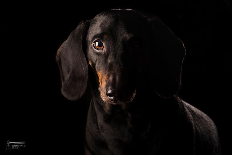 Black in the Shade - Wat doe je als je je verveeld op een vrijdag avond?<br /> Foto&#039;s maken van je huisdier natuurlijk!<br /> <br /> Als je no