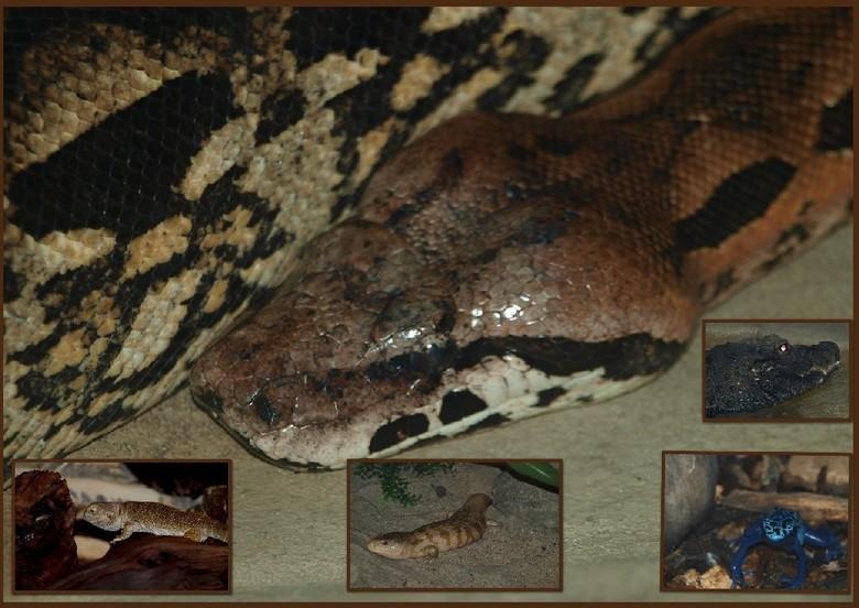 reptielen   Aqua  Zoo -   deze beestjes   zaten gelukkig allemaal achter glas <br /> <br />   fijne zondag  gr bets