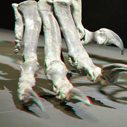 Claw Plateosaurus Naturalis 3D