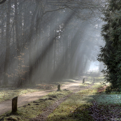 Mooi licht door de bomen.......