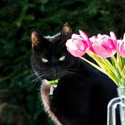 Fleurige huiskat