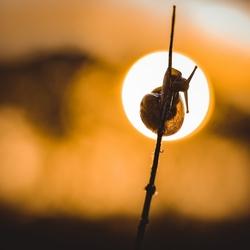 Snail by sunrising