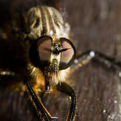 Moseltal vlieg-achtige