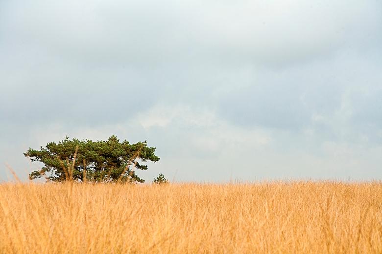 Worth Rhederheide - Op een bewolkte, grauwgrijze dag.