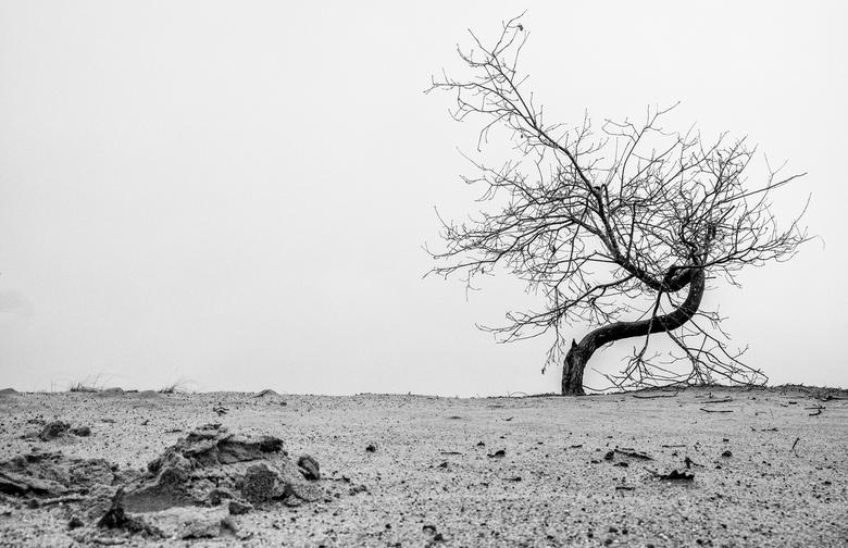 Eenzame boom Kootwijkerzand - Eenzame boom in Kootwijkerzand tijdens een mistige ochtend