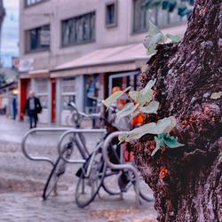 City meets nature