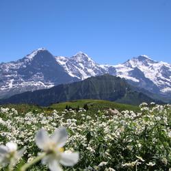 schynnige platte Zwitserland