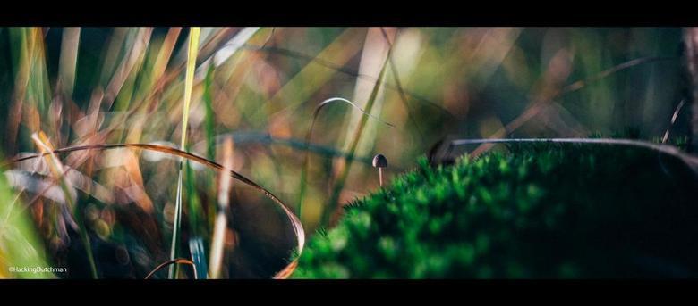 Avontuur - Kleine paddenstoel die van de groene mosheuvels naar de lange grassprieten op weg is.<br /> <br /> <br /> <br /> Gemaakt met de Carl Ze