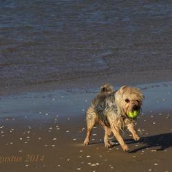 Spelen met de bal