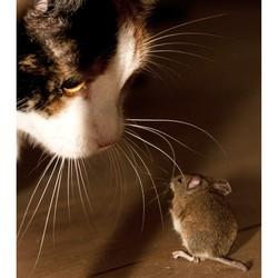 Kat en Muis Spel