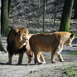 Kan ook gebeuren in de dierentuin jammer