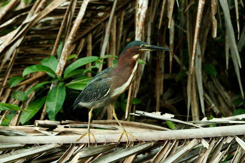 In de vrije natuur.... - Begin Oktober in Costa Rica geweest... en daar schoot ik deze foto!<br /> <br /> Beetje bijgesneden, iets onderbelicht, en
