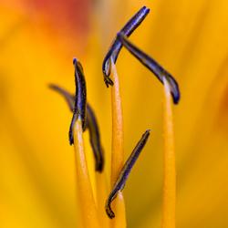 Flower Details 1