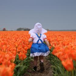 oranje boven + fijne koningsdag + hollands bloemenmeisje tussen de oranje tulpen