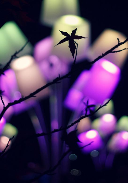 my personal glow - Dit jaar eens een andere/persoonlijke twist aan GLOW Eindhoven gegeven, zonder statief en met 1 lens: 50mm 1.8<br /> <br /> Hierd