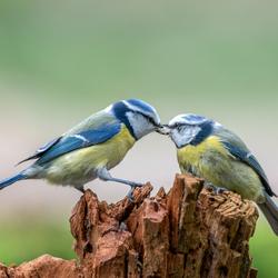 Liefde is ..... elkaar eten geven (2)