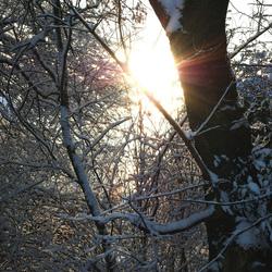 een ochtendzonnetje in de sneeuw