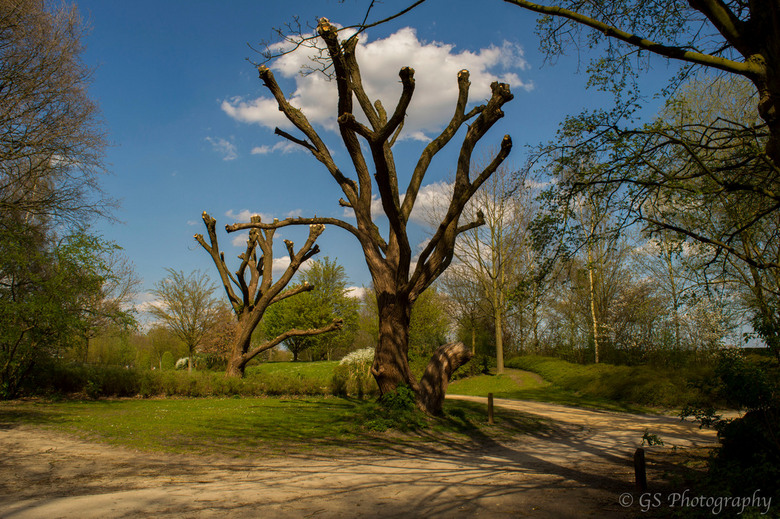 Eenzame boom -
