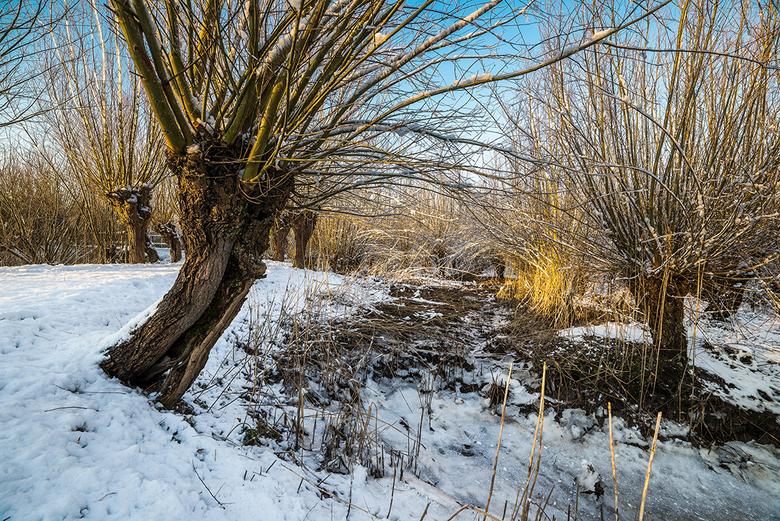 Willows in the sun on a snowy day - Een sneeuwerige dag bij de Rhoonse Grienden. Dit gebied staat onder invloed van Eb en Vloed waardoor de slootjes m