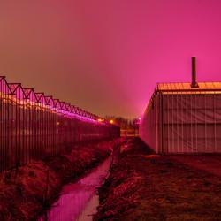 Verlichten kassen met paarse lampen