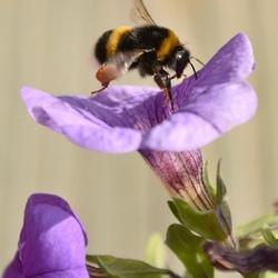 De lekkerste bloemenhoning uitwogen tuin