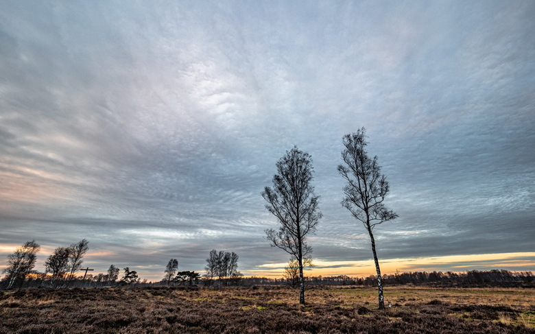 Wolken en bomen -